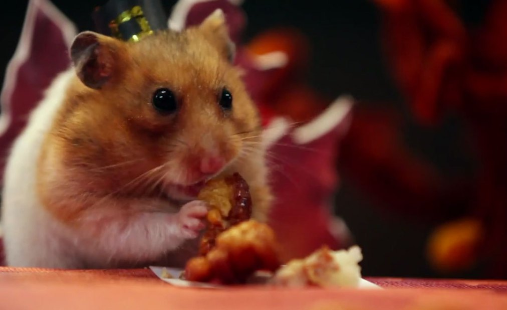 """""""A Tiny Hamster Thanksgiving"""""""