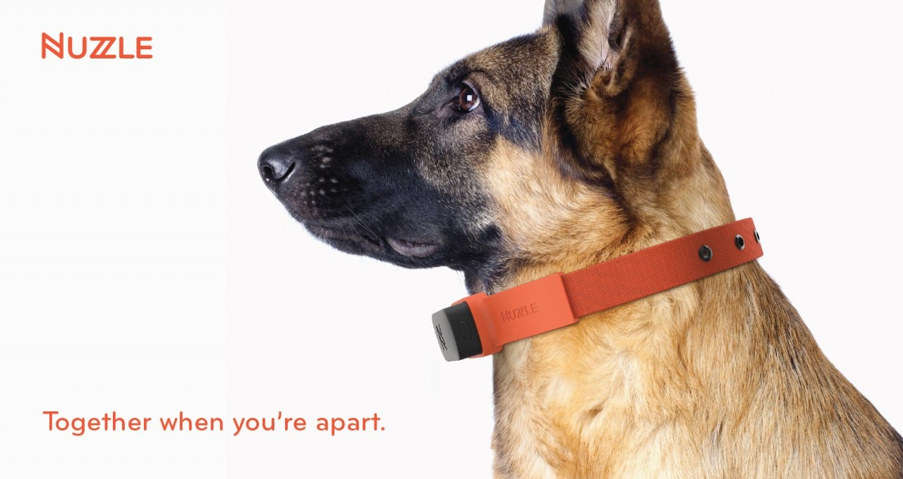 Nuzzle-A-GPS-Tracking-Pet-Collar-App-and-Insurance